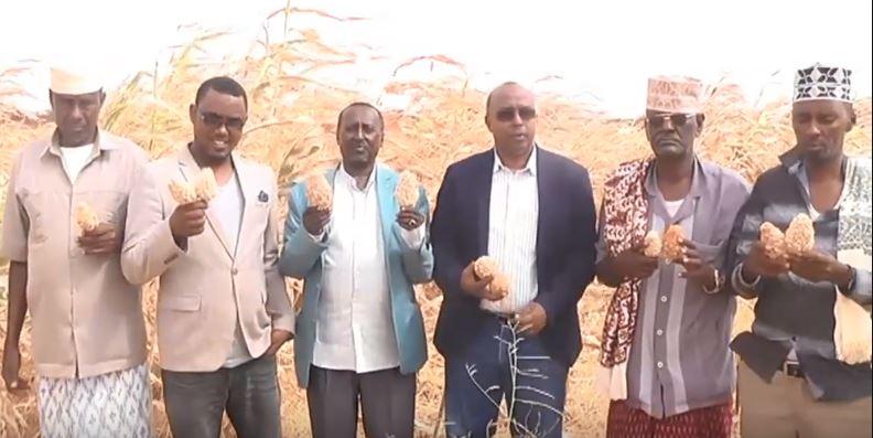 Gudaha:-Wasaarada Beeraha Somaliland Ayaa Bilowday Gooynta Mashruucii Beeraha Ee Degaanka Beer.