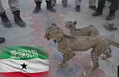 Ciidamada Booliska Somaliland Oo Fashiliyey isku-day lagu Dhoofinayey Duur-joog.