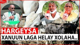 Sucuudiga Oo Joojiyay Xoolihii Somalida & Siyaasiyiinta Madasha Waddatashiga Oo Qayla-dhaan Ka Muujiyay