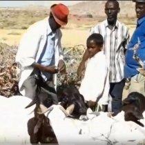 Daawo:-Wasaarada Xanaanada Xoolaha Somaliland Oo Talaalka Xoolaha Ka Bilowday Iyo Goobta Laga Bilaabay.