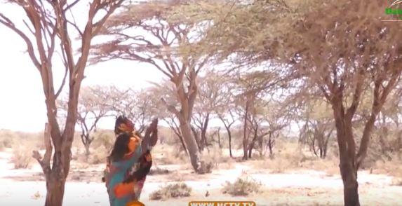 Daawo: Hooyo Ku Nool Caasimada Somaliland Oo Suuqa Usoo Iibgaysa Geed Ay Qutaan Xooluhu Oo Ka Warantay Duurafteeda Nolaleed
