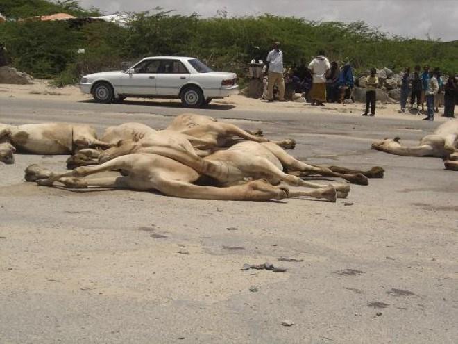 Deg Deg;Ammison Oo 25 Neef Oo Gela Ku Dishay Deeganada Konfurta Somaliya.