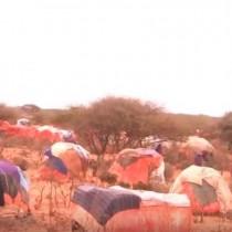 Daawo:Dadkii Xooluhu Ka Baxen Ee Ku Soo Barakacay Degmada Waraabeyey Oo Baaq Culus U Diiray Madaxwaynaha Jamhuuriyada Somaliland