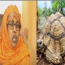 Daawo:Suuqyo Cusub Oo Lagu Kala Iibsanaayo Xayawaanka Diinka Oo Lagu Arkay Somaliland Iyo Wasaarada Deegaanka Oo Si Adag Uga Hadashay,