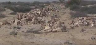 Daawo:Maxda Deegmooyinka Somaliland Iyo Maxa Kale Haysata Boobka Dhulka Danta Guud+Qaylo Ka Soo Yeedhaysa Bulshada Berbera.